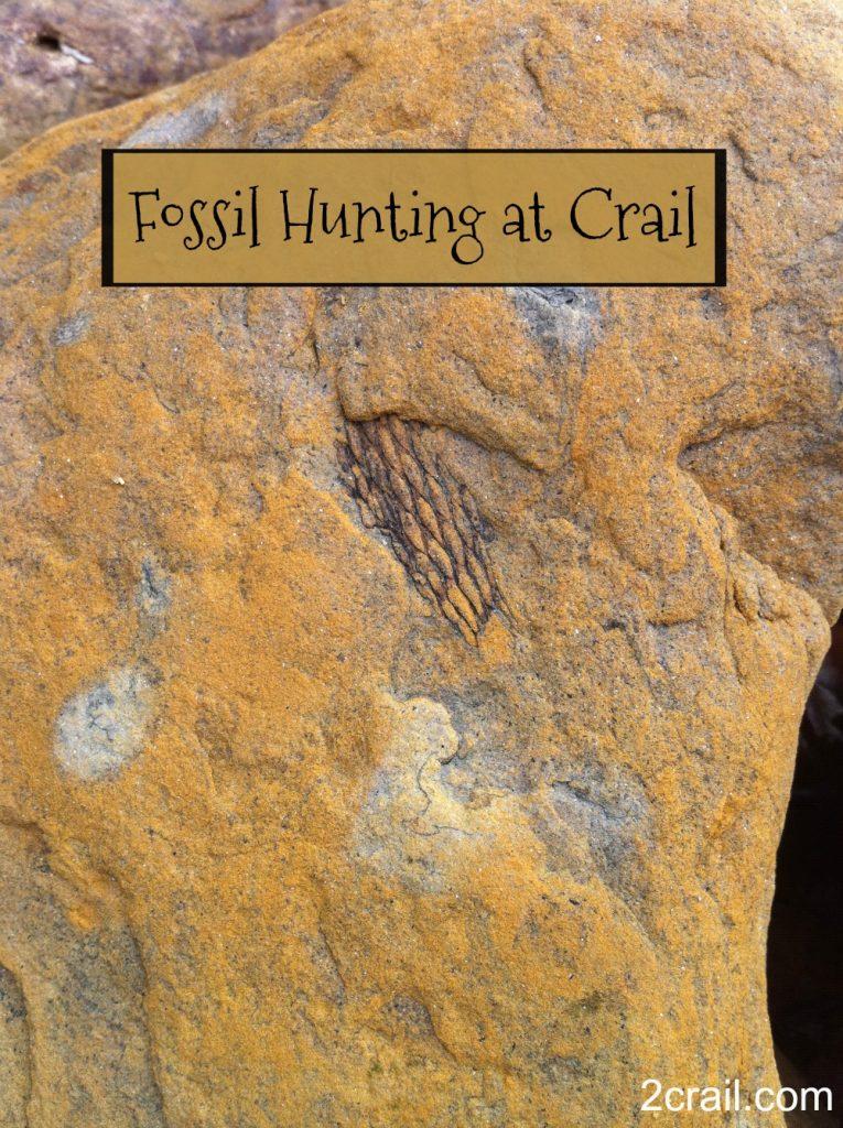 fossil hunting at crail