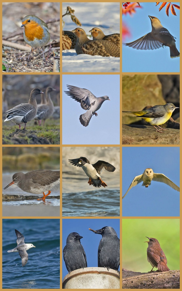 12 birds of Crail Christmas