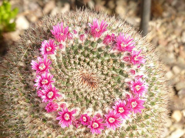 st-andrews-botanic-cactus