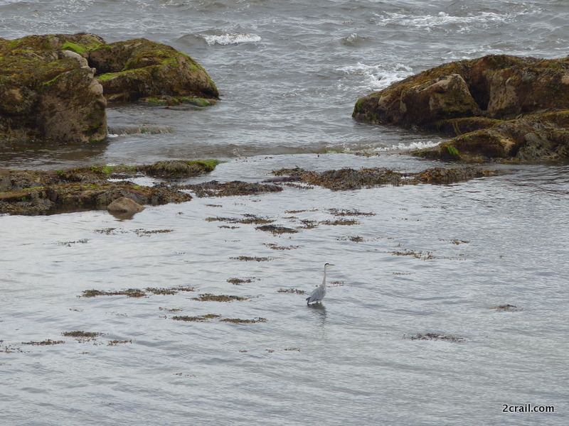 heron roome bay crail