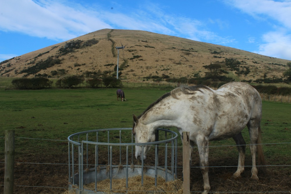 horse in front of largo law
