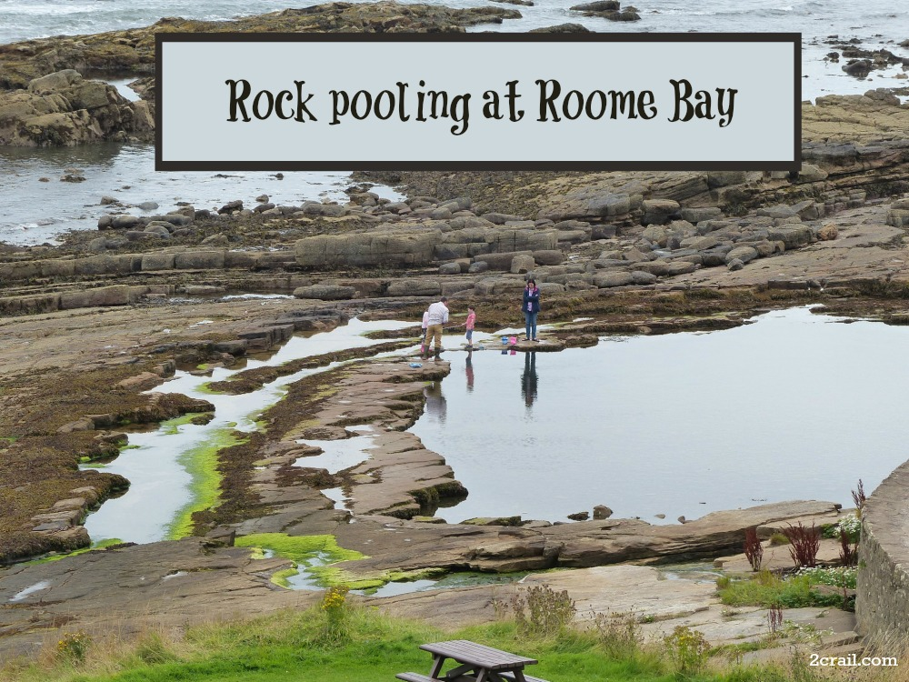 rock pooling roome bay
