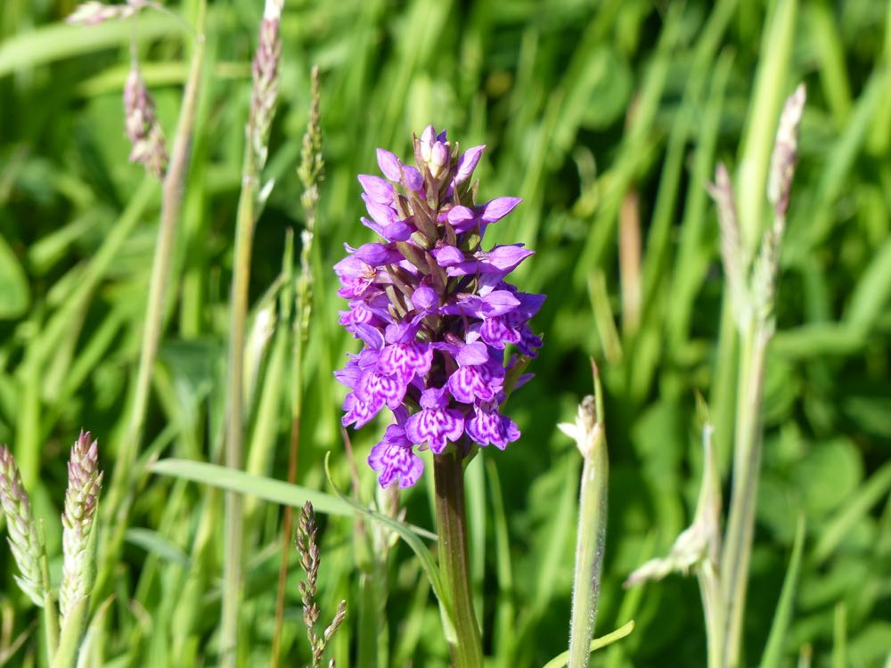 wild orchid east wemyss