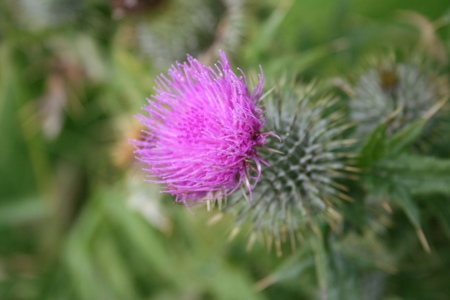 Wild Flowers Walk – Crail