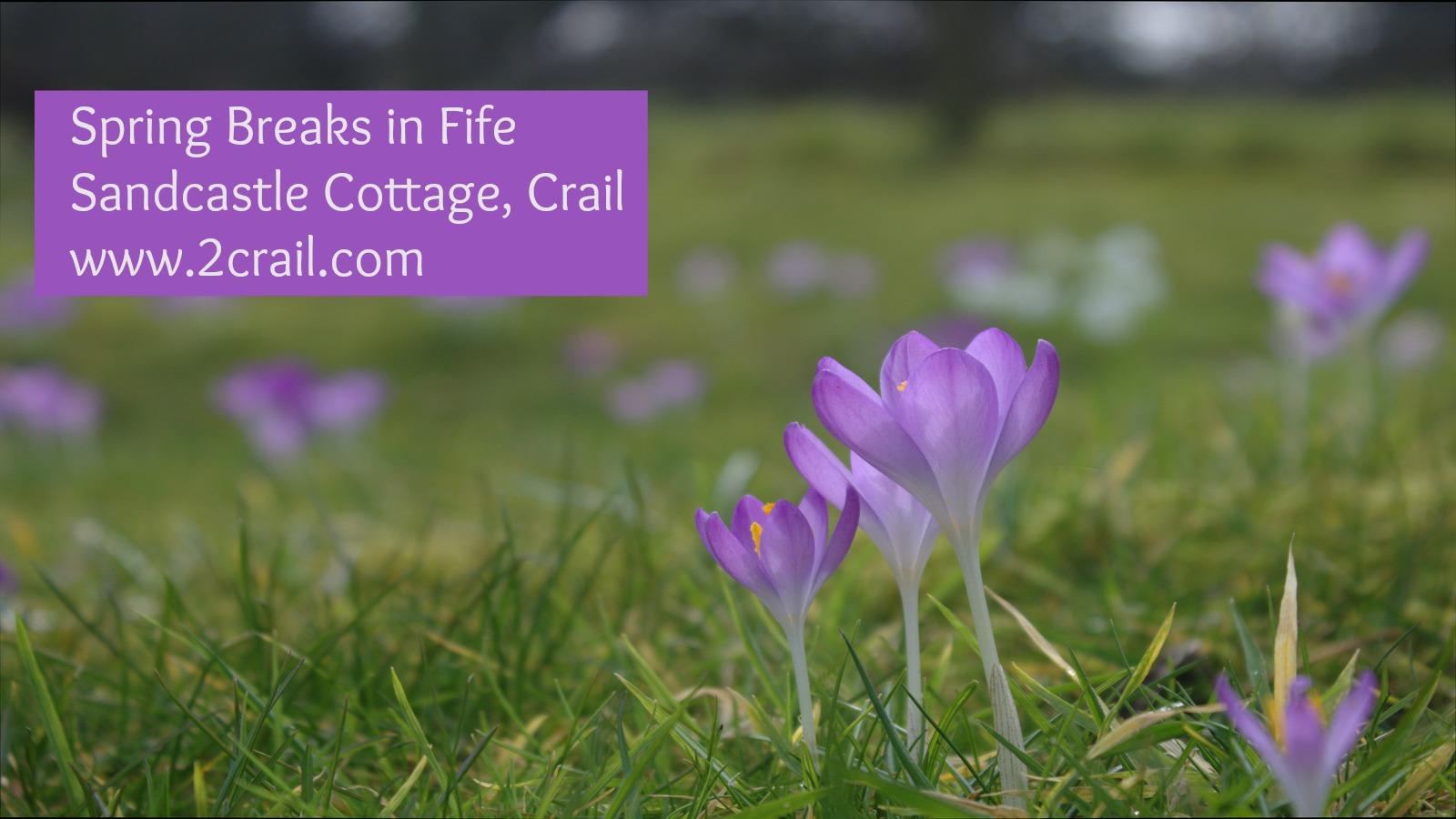 Spring Breaks in Crail