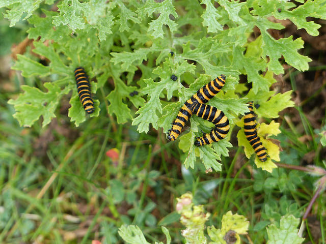 a colony of caterpillars