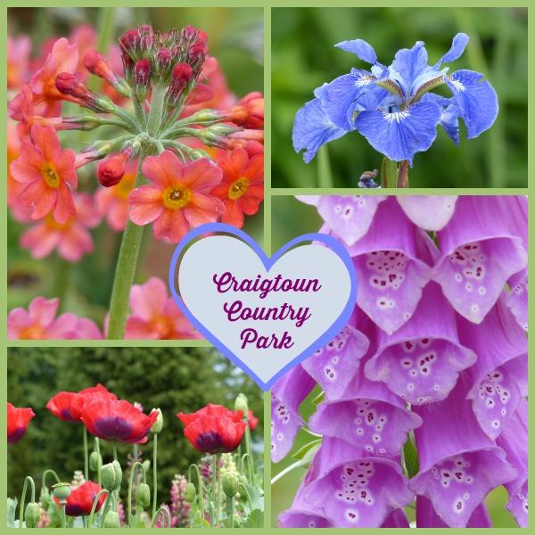 craigtoun-country-park-flowers