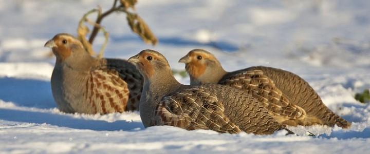 Crail's Twelve Birds of Christmas
