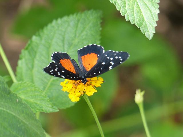 st-andrews-botanic-butterfly
