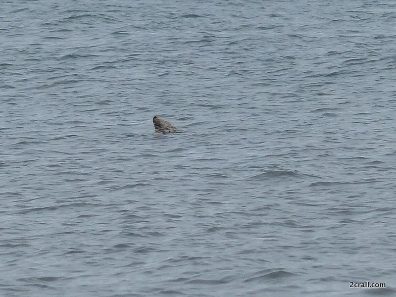 grey seal fife coastal path