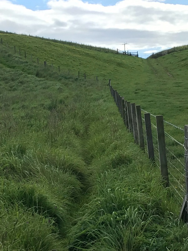 Fife Ness Circular Walk