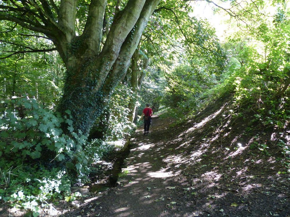 Denburn Wood