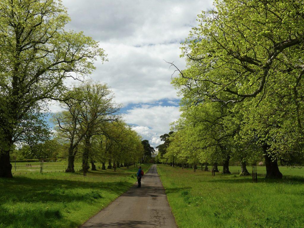 Pittenweem Balcaskie and St Monans - Tree Lined Road to Balcaskie House